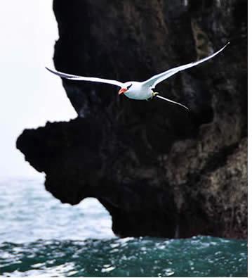 Vogels kijken in Bocas del Toro, Panama