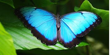 Vlinders in Bocas del Toro, Panama