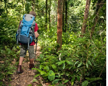 Wandelen en Jungle Trekking in Bocas del Toro, Panama