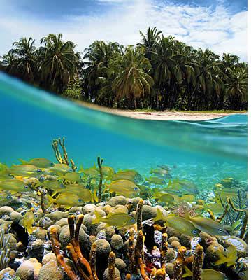 Snorkelen en duiken in Bocas del Toro, Panama